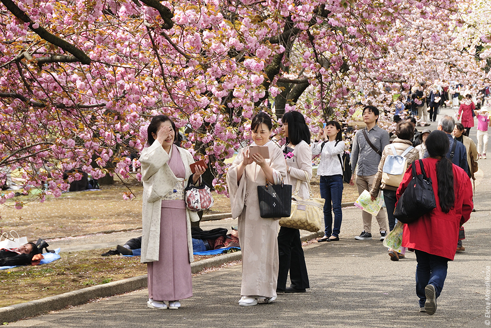Императорский парк Синдзюку-гёэн (新宿御苑)
