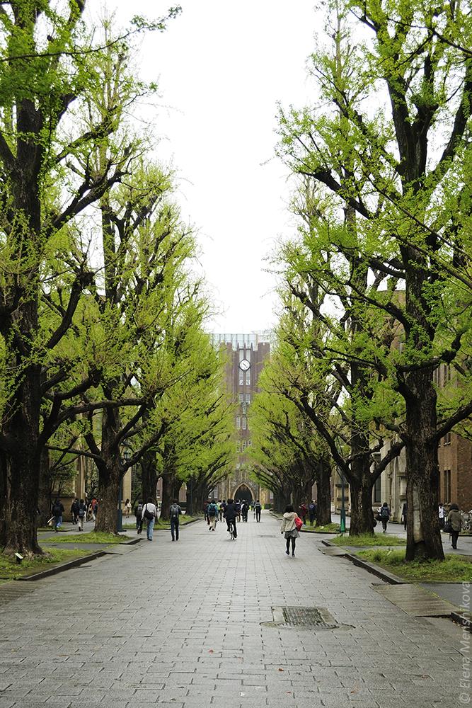 Токийский университет (東京大学)