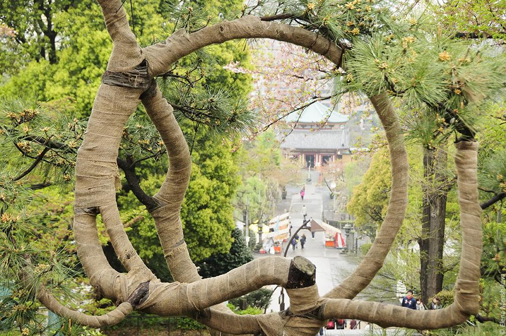 Вид на буддийский храм Shinobazunoike Bentendo (不忍池弁天堂) от другого буддийского храма Kiyomizu Kannon-do (清水観音堂) на холме