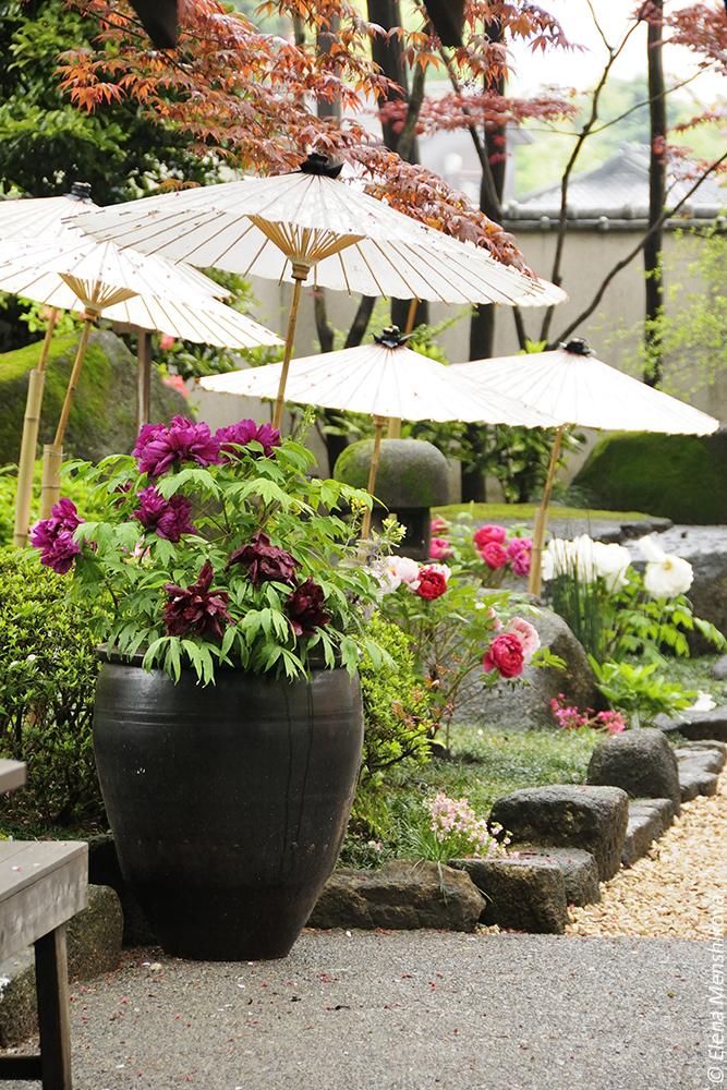 Сад Пионов в Парке Уэно (上野恩賜公園)