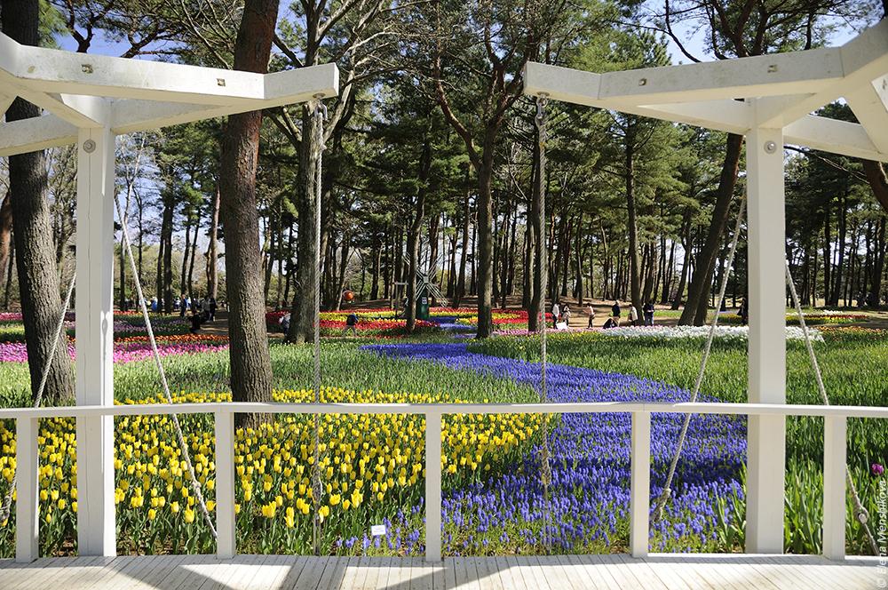 Hitachi Seaside Park (ひたち海浜公園)