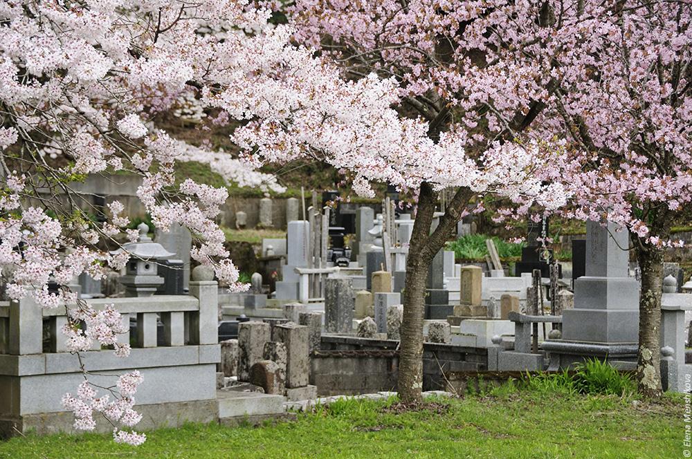 Фудзи Кавагучи Asama Shrine