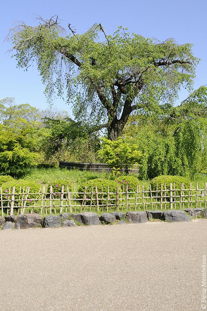 Киото Парк Маруяма (円山公園)