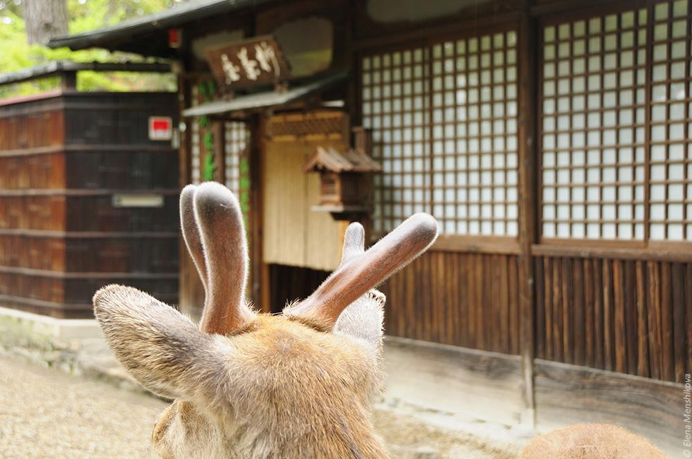 Нара Кофуку-дзи (興福寺)