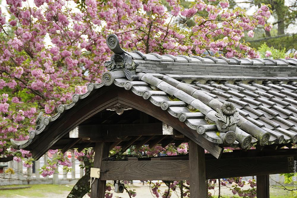 Нара Химуро-дзиндзя (氷室神社)